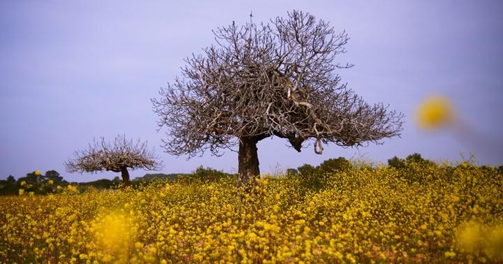 "Novetat: ""Formentera: illa endins"""