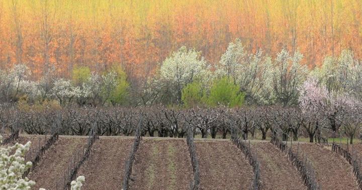 """Novetat: """"La Rioja"""""""