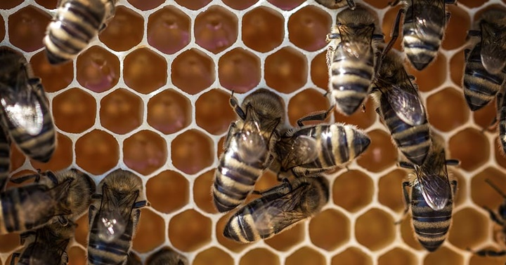 Dia Mundial de les abelles